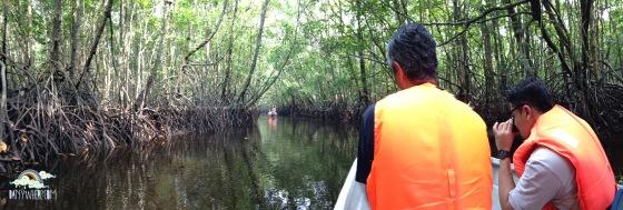 Cherating Mangrove